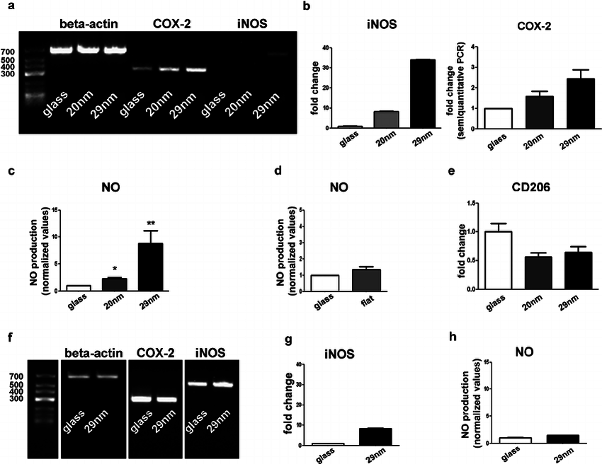 COX-2 and iNOS expression in microglia and astrocytes