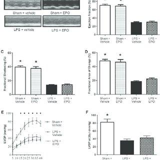 (PDF) Erythropoietin attenuates cardiac dysfunction in