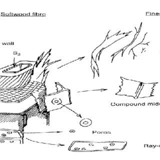 (PDF) Mechanical Pulp Based Nano-ligno-cellulose