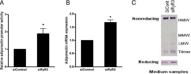 RyR3 knockdown via siRNA enhances adiponectin expression