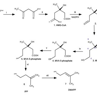 (PDF) Chemical Constituents and Biological Studies of