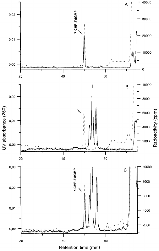 HPLC separation (system B) of 32 P-post-labelled DNA: ( A