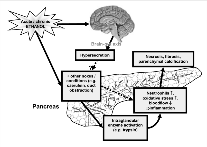 Schematic diagram of the role of the brain-pancreatic axis