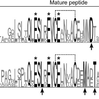 SDS-PAGE and Western blot analysis of soluble mineral