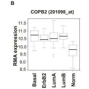 (A) Independent COPI subunits were depleted in MDA-MB-231