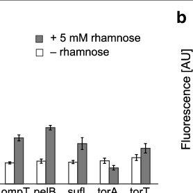 (PDF) A nanobody:GFP bacterial platform that enables