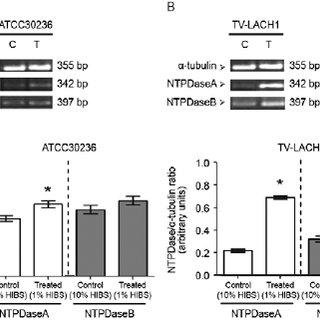 (PDF) Analysis of the NTPDase and ecto-5?-nucleotidase