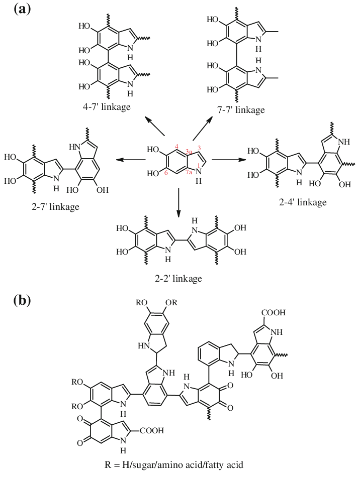 Structures of a Types of Linkages found in melanin