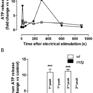 Working model. ( A ) 20 Hz electrical stimulation in adult