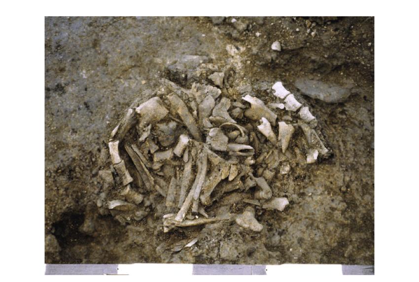 sheep skeleton diagram 2006 chevy colorado wiring the complete tya 642 2316 deposit no 11 found under download scientific
