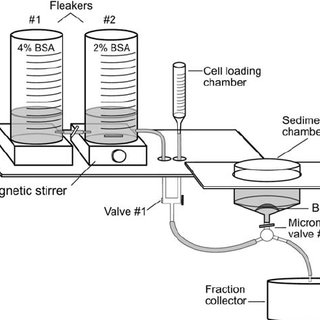 (PDF) Isolation and Short-Term Culture of Mouse