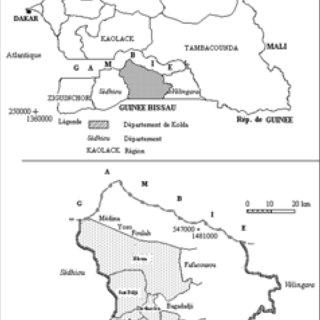 (PDF) Sélection de variétés d'oignon (Allium cepa L