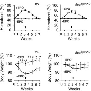 Erythropoietin (EPO) is required for red blood cell