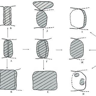 Phylogenetic relationships among the nine control region