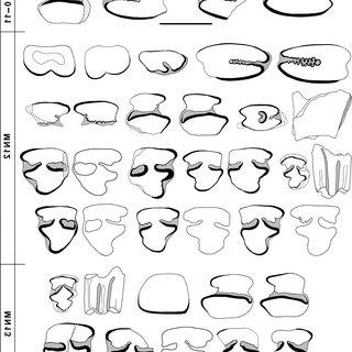 (PDF) New Late Miocene Alilepus (Lagomorpha, Mammalia