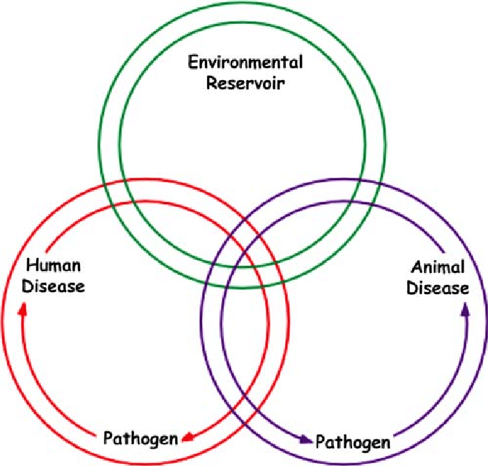 The interrelationship among human disease. animal disease. and the...   Download Scientific Diagram
