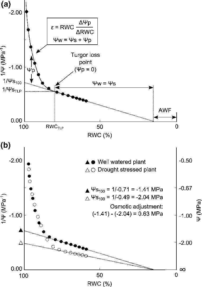 hight resolution of 3 an example p v curve a indicating the relationship between the inverse of the plant water