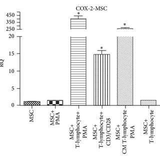 HLSCs inhibit NK activity. NKs, prestimulated for 24 hours