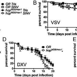 (PDF) Broad RNA Interference-Mediated Antiviral Immunity