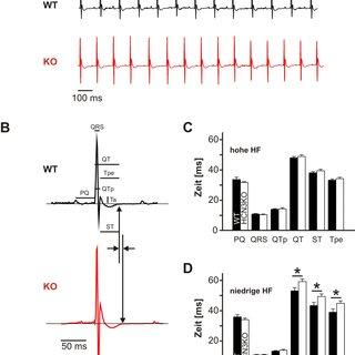 (PDF) Untersuchung zur kardialen Funktion des
