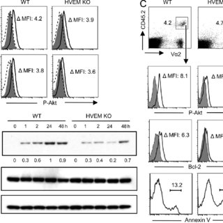 T cell–expressed LIGHT binding to HVEM supports the