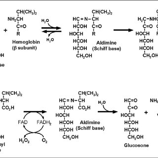 The chemical reactions behind the synthesis and FAODbased