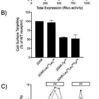 (PDF) Homodimerization of the ß2-Adrenergic Receptor as a