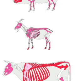 relative mne body part distributions of pig sheep goat and [ 680 x 1190 Pixel ]