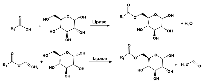 A) Enzyme catalyzed synthesis of alkylglycosides