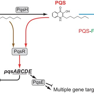 (PDF) Structural Basis for Native Agonist and Synthetic