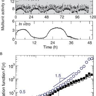 The master clock in the suprachiasmatic nucleus (SCN