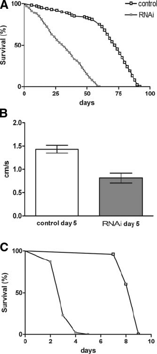 General reduction of fh expression impairs life span and