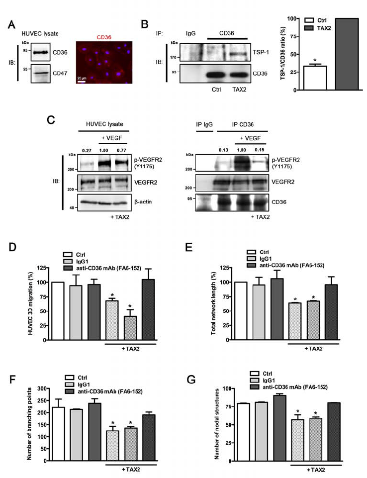 Anti-angiogenic properties of TAX2 are mediated by TSP-1