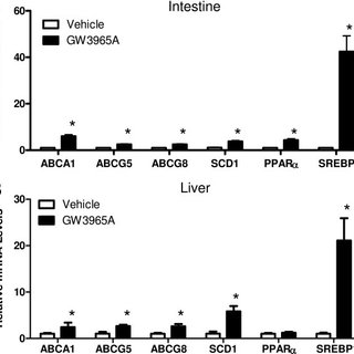 (PDF) Intestine-Specific Regulation of PPARα Gene