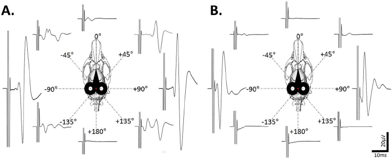Effect of the coil rotation on the MEPdia. A