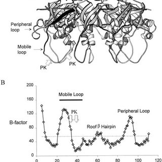 Oligomeric structure of T4Hsp10 and mobile loop deletion