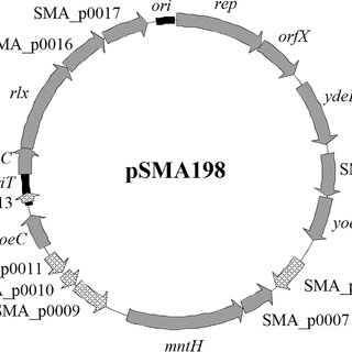 Annotated map of pSMA198. Black boxes indicate the