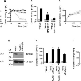 (PDF) Article RACK1 Inhibits TRPM6 Activity via