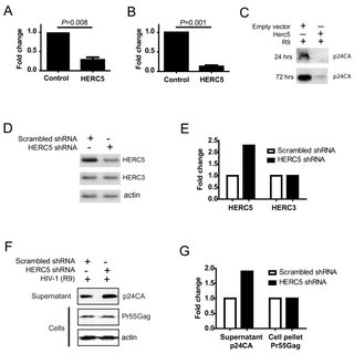 (PDF) Human HERC5 restricts an early stage of HIV-1