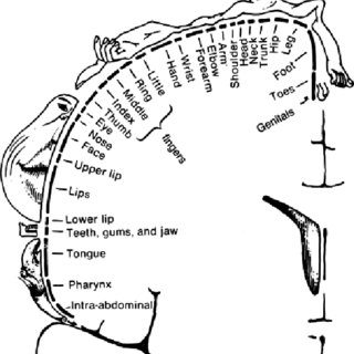 Schematic of the Langmuir-Blodgett (LB) technique. (a