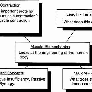 Sliding Filament Theory Of Muscle Contraction In Which Actin