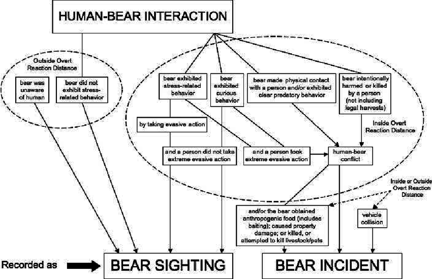 Flow chart illustrating whether a human–bear interaction