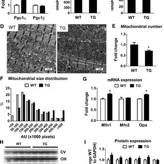 (PDF) Promoting PGC1α-driven Mitochondrial Biogenesis Is