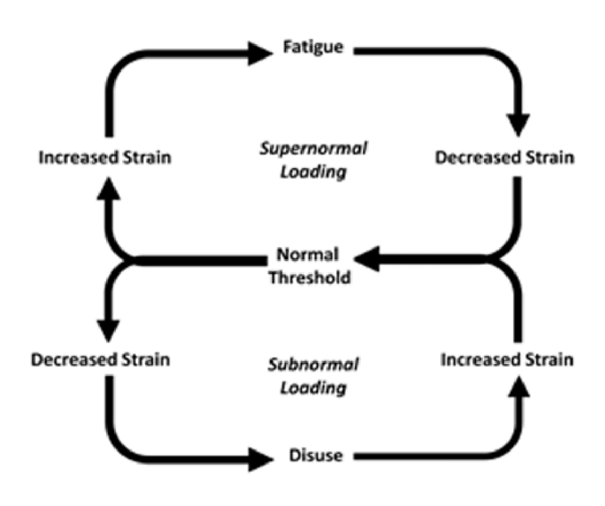 5 Simplified schematic diagram illustrating the negative