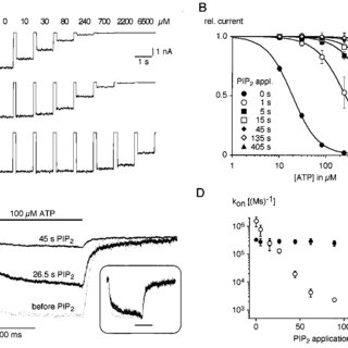 (PDF) PIP2 and PIP as determinants for ATP inhibition of K
