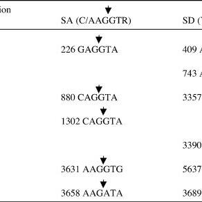 (PDF) Analysis of novel human papillomavirus type 16 late