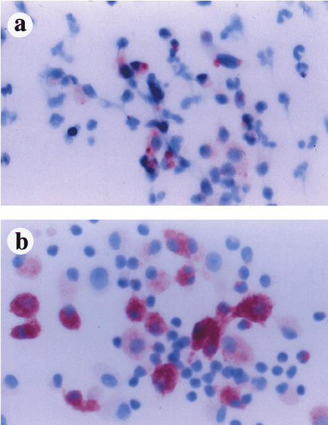 FIV p26 Gag expression by in vivo-infected monocytes upon ...