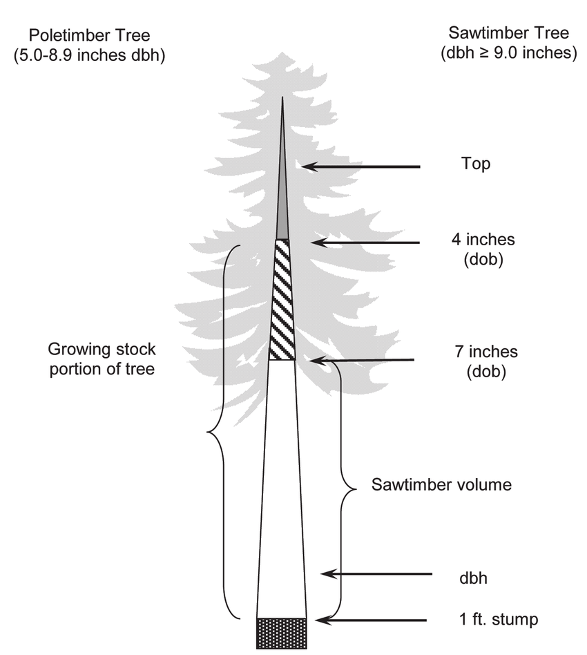 hight resolution of sections of softwood trees