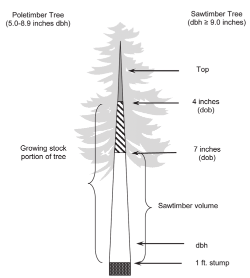 small resolution of sections of softwood trees