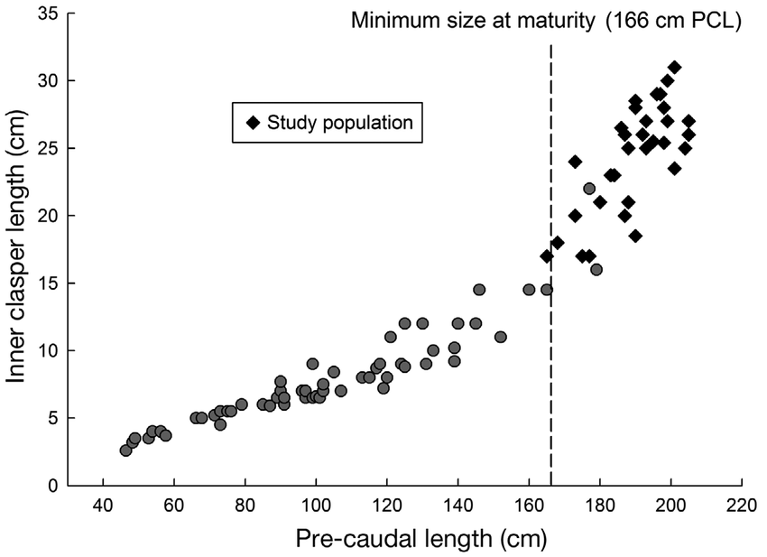 Relationship between inner clasper length (ICL) and pre